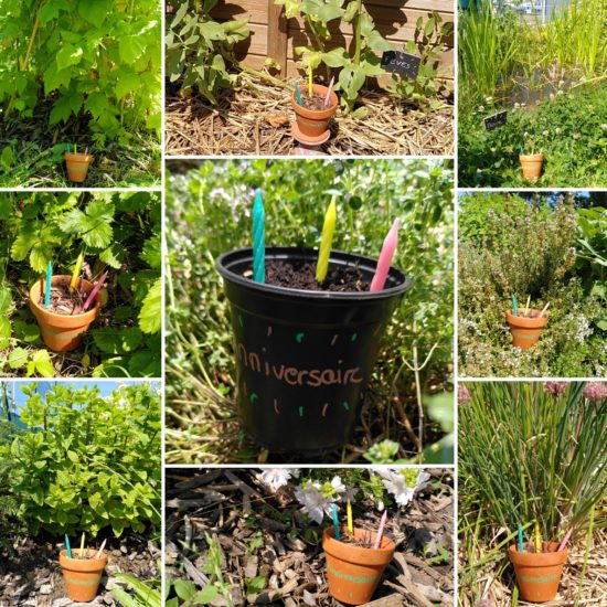 pots 3 bougies